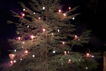 Fichte, Weihnachtsbaum, Waldweihnacht