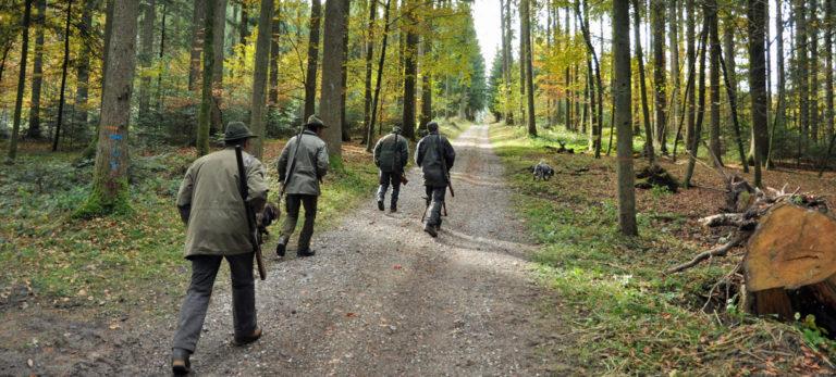 Jagd, Jagdaufbruch, Herbst, Rehjagd