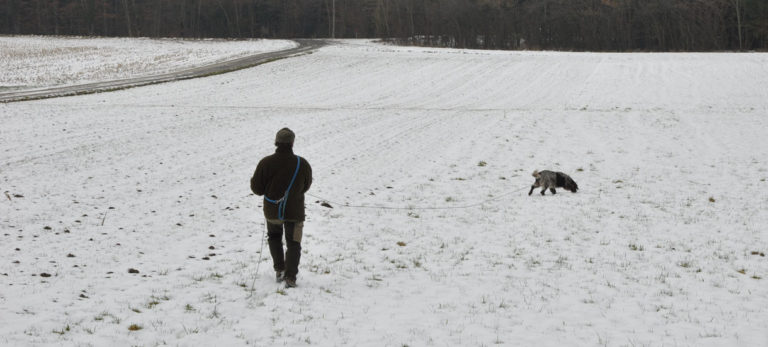 Nachsuche, Deutscher Wachtelhund, Winter, Schweissriemen, Ausarbeitung Schweissfährte